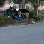 Randagi e buste rifiuti  abbandonate a Baia Felice